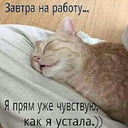 Фото мужчины кот, Севастополь, Россия, 40